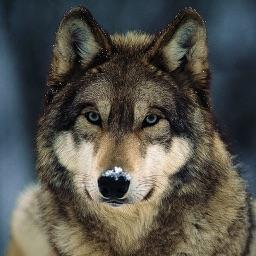 Wolf Hunting Calls
