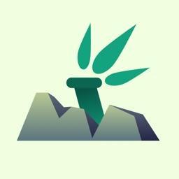 石竹-一键在线订购精品鲜花