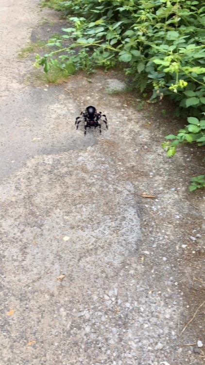 AR Spiders screenshot-2