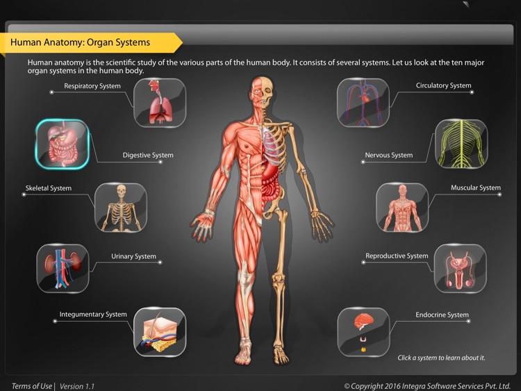 Human Anatomy - Digestive
