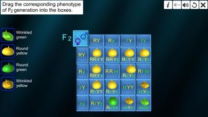 Dihybrid cross screenshot 8