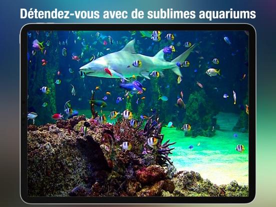Screenshot #4 pour Aquarium Live HD +