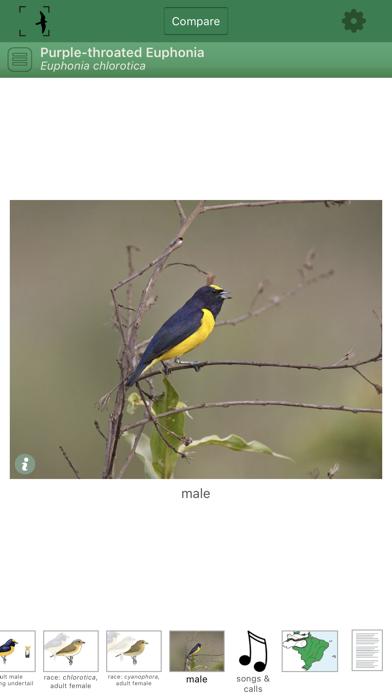Birds of Brazil Screenshot 3