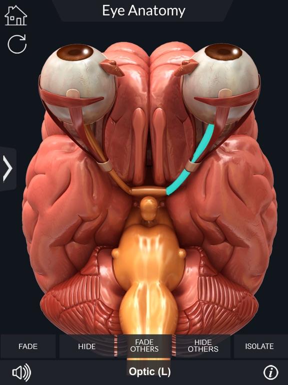 My Eye Anatomy screenshot 14