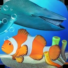 Activities of Fish Farm 3 - Aquarium