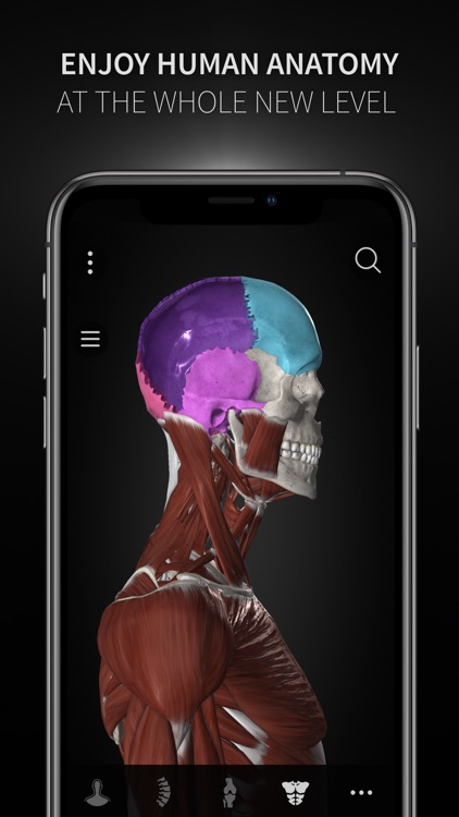 Anatomyka screenshot-3