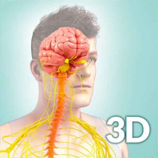 My Nervous System Anatomy