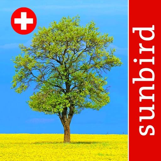 Baum Id Schweiz - Naturführer