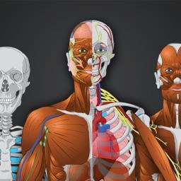 Memorix Anatomy QUIZ