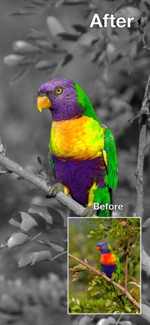 ‎Color Changer-Coloring Editor Screenshot