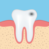 Coskun CAKIR - Dental Anatomy Quizzes artwork