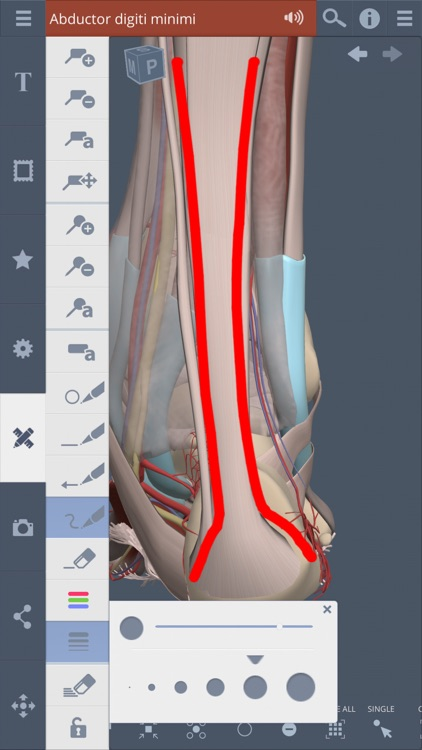 Leg, Ankle, Foot: 3D Real-time screenshot-4