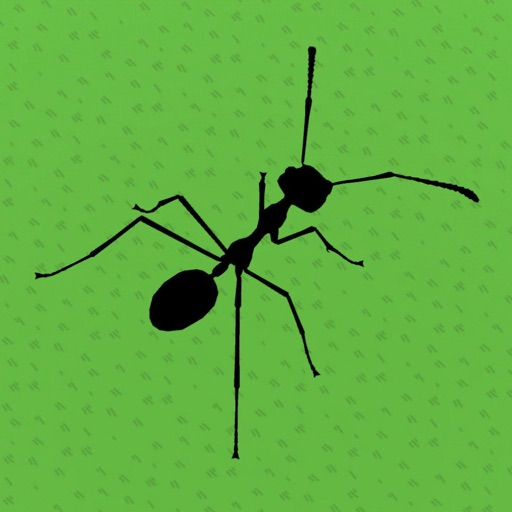 The Ant Game