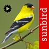 Bird Song Id USA songs & calls