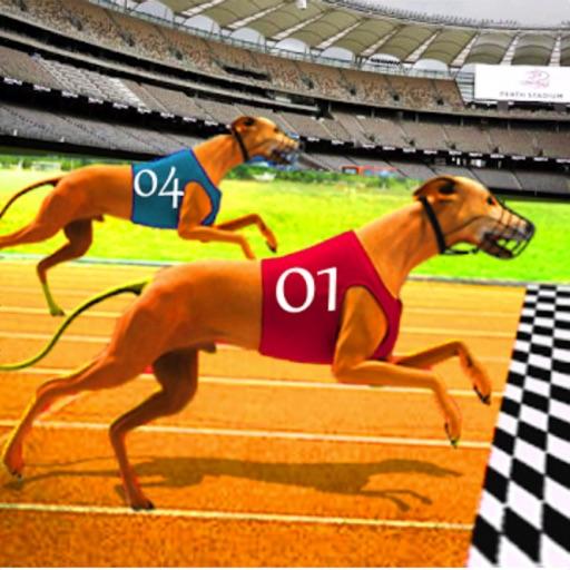 Dog Race Greyhound 3D