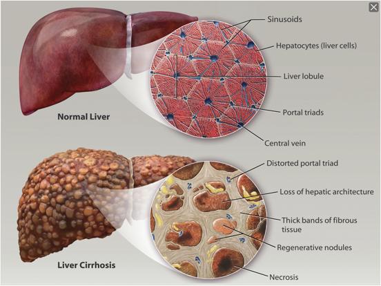 Physiology & Pathology screenshot 20