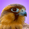 App Icon for iBird Pro Guide to Birds App in Panama App Store