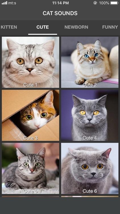 Cat Sounds - Meow Soundboard