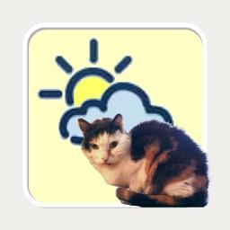 WeatherCatPad