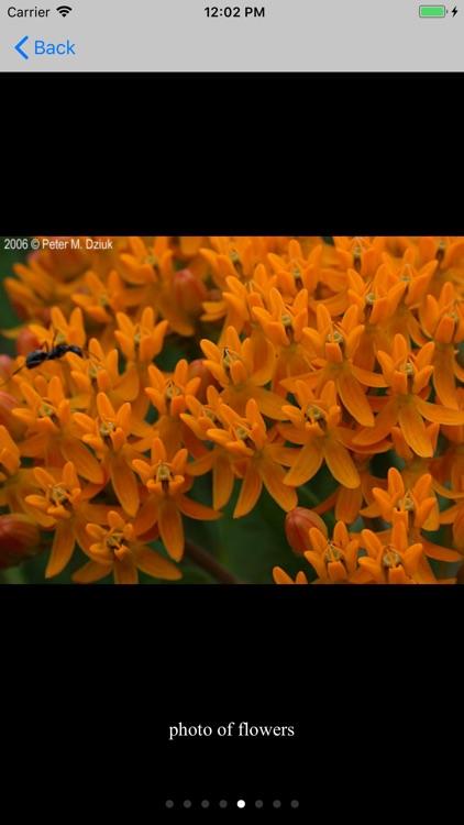 Minnesota Wildflowers Info. screenshot-4