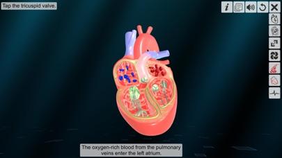 Heart - An incredible pump screenshot 5