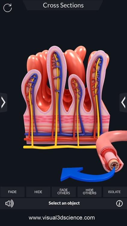 My Digestive System Anatomy screenshot-7
