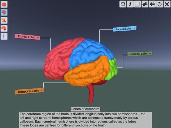 AR Human brain screenshot 13
