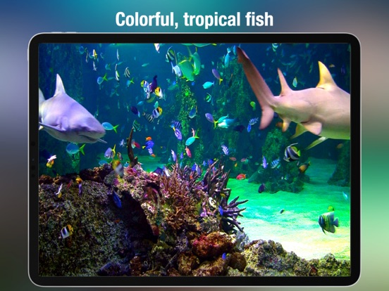Aquarium live HD free: Coral reef scenes with relaxing nature & ocean sounds for stress relief screenshot