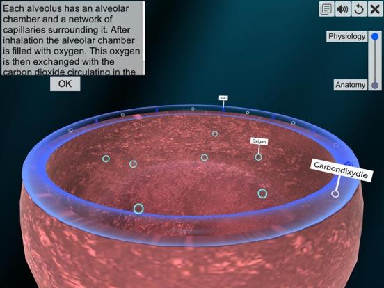 Respiratory system physiology screenshot 13