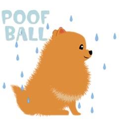 Pomeranian Dog Pom Pom Sticker