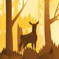 Wildfulness 2 - 静谧的大自然场景和声音