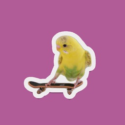 super cool skateboarding birds