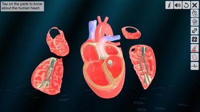 Heart - An incredible pump screenshot 3