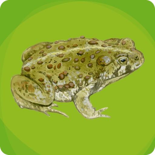 Amphibians of Utah