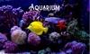 Deap Sea Aquarium 4K