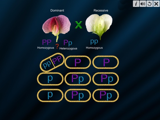 Test Cross: pea flower screenshot 10
