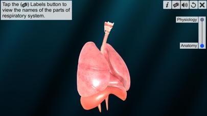 Respiratory system physiology screenshot 2