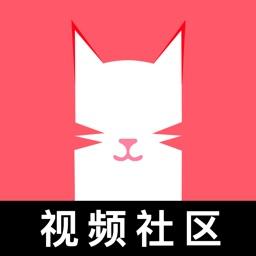 猫咪视频-聊天约会视频社区