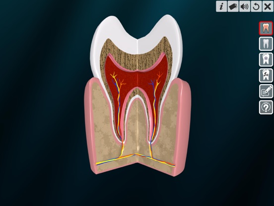 Incredible Human Teeth screenshot 10