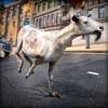 狂気の ヤギ:動物のレース - iPadアプリ