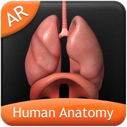 Human Anatomy Explorer AR
