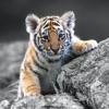 Amazing Animals Stickers Pack