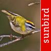 Mullen & Pohland GbR - Vogel Id Schweiz Grafik