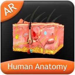 Human Anatomy - Integumentary