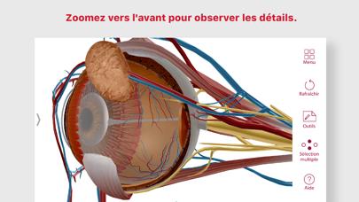 Screenshot #3 pour Anatomie & Physiologie