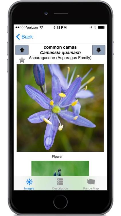 Washington Wildflowers screenshot-3