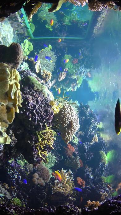 Aquarium Pack screenshot 3