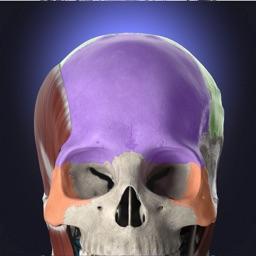 Anatomyka