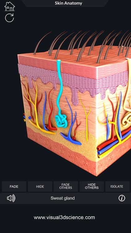 My Skin Anatomy screenshot-3