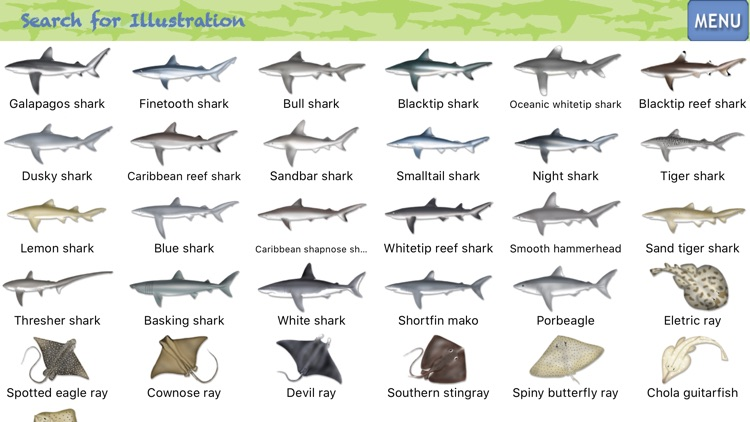 Sharks & Rays - ID Guide screenshot-1